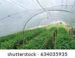 inside the greenhouse with... | Shutterstock . vector #634035935