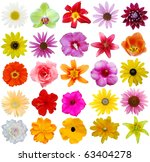 Assorted In 25 Flowers Style I...