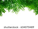 green leaves background  green...   Shutterstock . vector #634070489