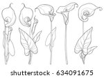 Vector Set With Calla Lily...