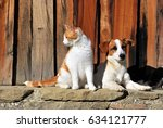 Stock photo cats and dog outside the cottage 634121777