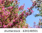 spring flowering apple tree... | Shutterstock . vector #634148501
