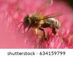 a honey bee on a pink flower | Shutterstock . vector #634159799