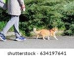 a cat on a leash walking in a... | Shutterstock . vector #634197641