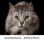 close up cat's face and eyes | Shutterstock . vector #634219631