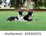 Small photo of Boarder Collie