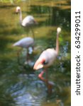 Small photo of Soft : Blurred : Art photography / American flamingo