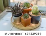 the cactus for a decoration  | Shutterstock . vector #634329359