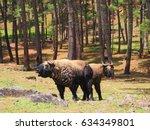 Takins The National Animal Of...