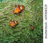 nemo clown fish in their... | Shutterstock . vector #634368119