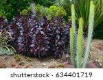 Dark Purple Leaves Of The...