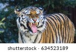 the amur tiger | Shutterstock . vector #634523189