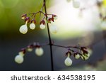 white flower | Shutterstock . vector #634538195