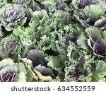 Small photo of Pattern of ornamental cut kale or ornamental leaved background Kale(Brassica oleracea var.acephala)