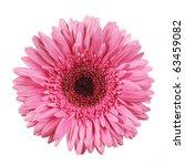 pink gerber - stock photo