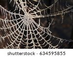 Cobweb Frozen Cold