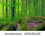 Mixed Greenwood Forest  Mossy...