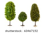 Three Green Trees In A Row...