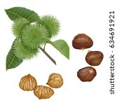 chestnut plant  nuts and peeled ... | Shutterstock .eps vector #634691921