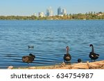 Black Swans At The Lake In...