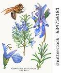 botanical watercolor... | Shutterstock . vector #634756181