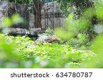 varanus salvator   Shutterstock . vector #634780787