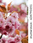 flowering cherry | Shutterstock . vector #634793351