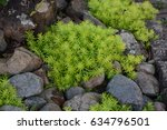 succulents and stone | Shutterstock . vector #634796501