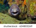 moray eel close to the camera.... | Shutterstock . vector #634803269