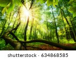 green beech forest with bright... | Shutterstock . vector #634868585