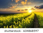 Blossoming Rapeseed Field...