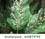 medicinal plant | Shutterstock . vector #634879799
