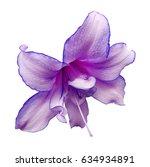 purple white  flower on the... | Shutterstock . vector #634934891