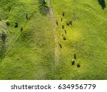 Aerial view of group of cows in sunset with beautiful shadow
