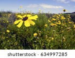 close up of the wild yellow... | Shutterstock . vector #634997285