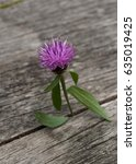 a single scottish thistle... | Shutterstock . vector #635019425