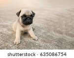 Stock photo funny pug dog playing on concrete road 635086754