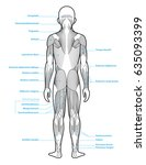 stylized anatomy diagram...   Shutterstock .eps vector #635093399