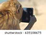 Monkey With Smartphone Making...