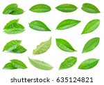 green tea leaf isolated on... | Shutterstock . vector #635124821