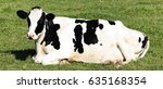 black and white cow lying down... | Shutterstock . vector #635168354