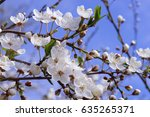 blooming tree | Shutterstock . vector #635265371