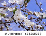 blooming tree | Shutterstock . vector #635265389