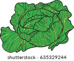 cabbage color hand drawn... | Shutterstock . vector #635329244