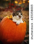 Stock photo halloween cat in a pumpkin 635358005
