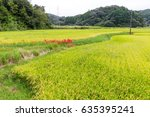rice field in forest | Shutterstock . vector #635395241