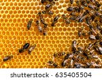 closeup of bees on honeycomb in ... | Shutterstock . vector #635405504