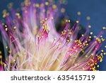 carpel closeup of pink flowers... | Shutterstock . vector #635415719