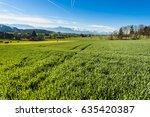 cows grazing on fresh green...   Shutterstock . vector #635420387