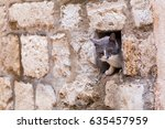 a cat peers out from a gap in...   Shutterstock . vector #635457959